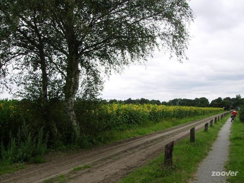 Omgeving-Vledderveen-