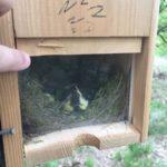 Nieuw leven in vogelnestkastjes van IJsclub Nieuw Leven
