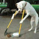 Overlast hondenpoep